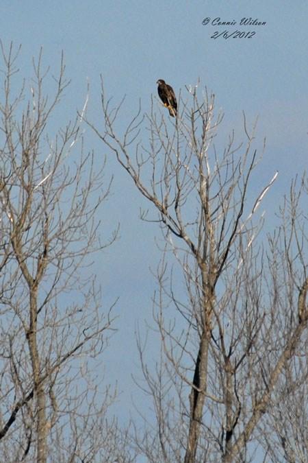 Eagle Blog - Fort Donelson National Battlefield (U S