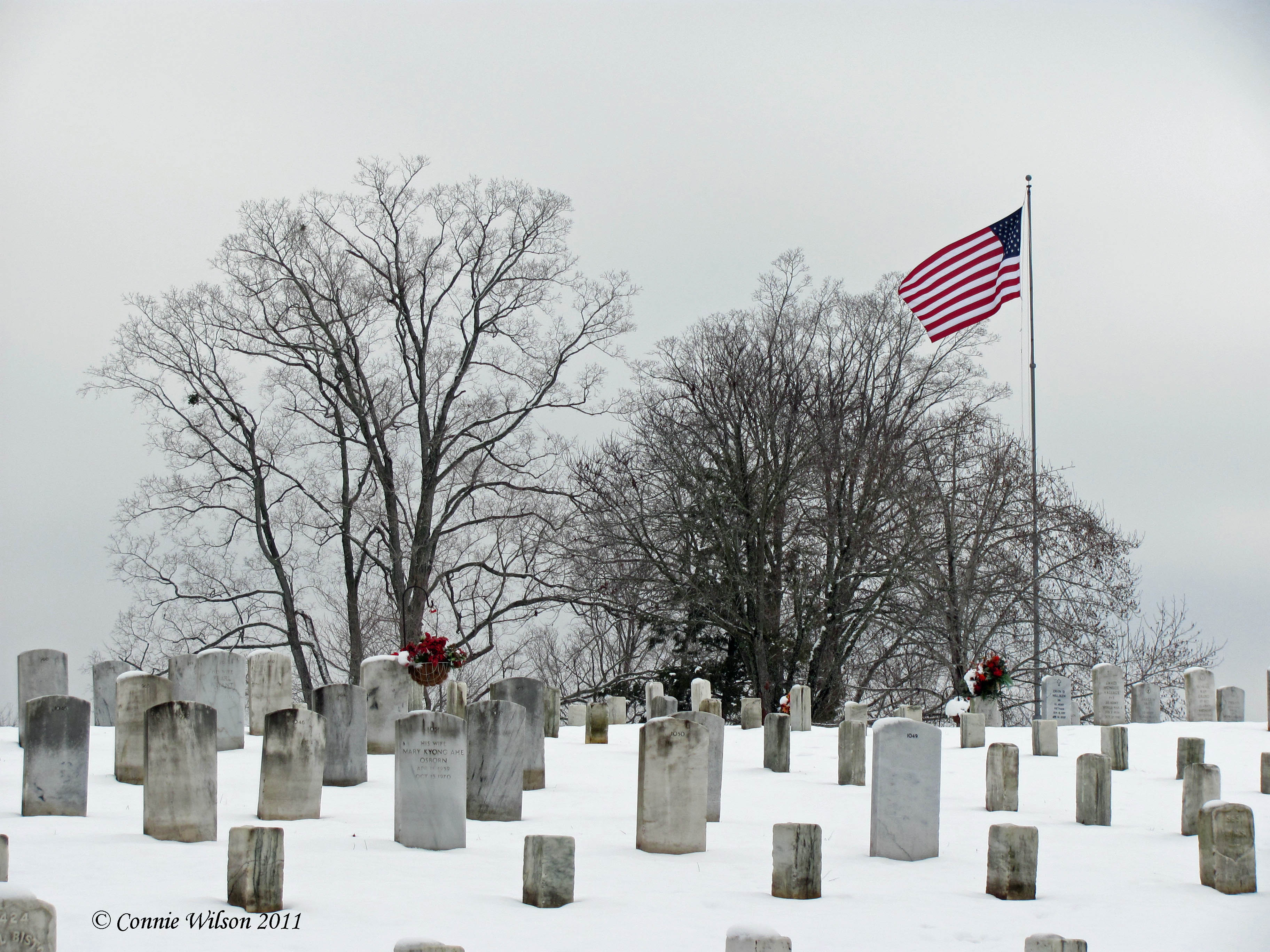 The National Cemetery, January 27, 2011