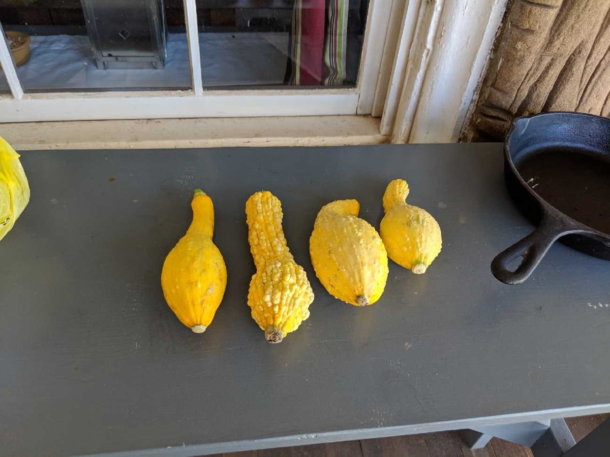 Four yellow summer squash on a table.