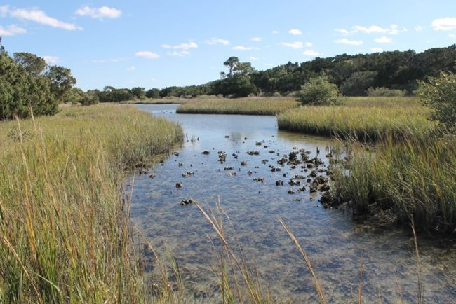 Image result for marsh