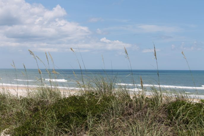 Sea oats crest a dune which protects inland areas from the open ocean seen in the distance.