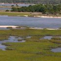 In the number of animal species, the estuary and salt marsh is the most diverse habitat in the park.