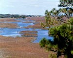 Fort Matanzas has a variety of habitats for a variety of plants and animals.