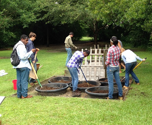 Students replanting rice pots for rice exhibit