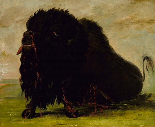 Painting of a dying buffalo bleeding from arrow wound in side and from nose.