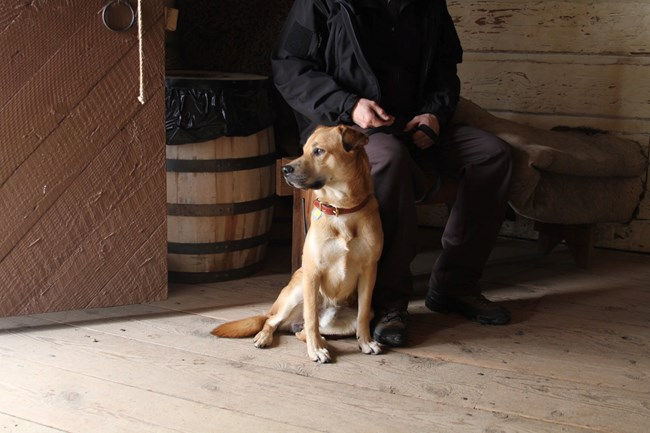 Leashed Dog sits in Trade House next to owner