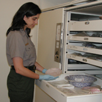Curator Tessa Langford holds an artifact next to a large storage drawer in the park's collection facility
