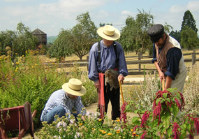 Volunteers and staff at work in the Fort Vancouver Garden.