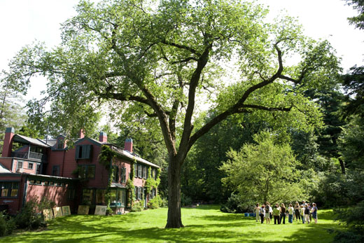 Visitors experience the Olmsted Elm in the South Lawn.