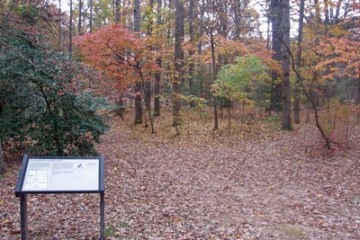 Site of wounding of Jackson