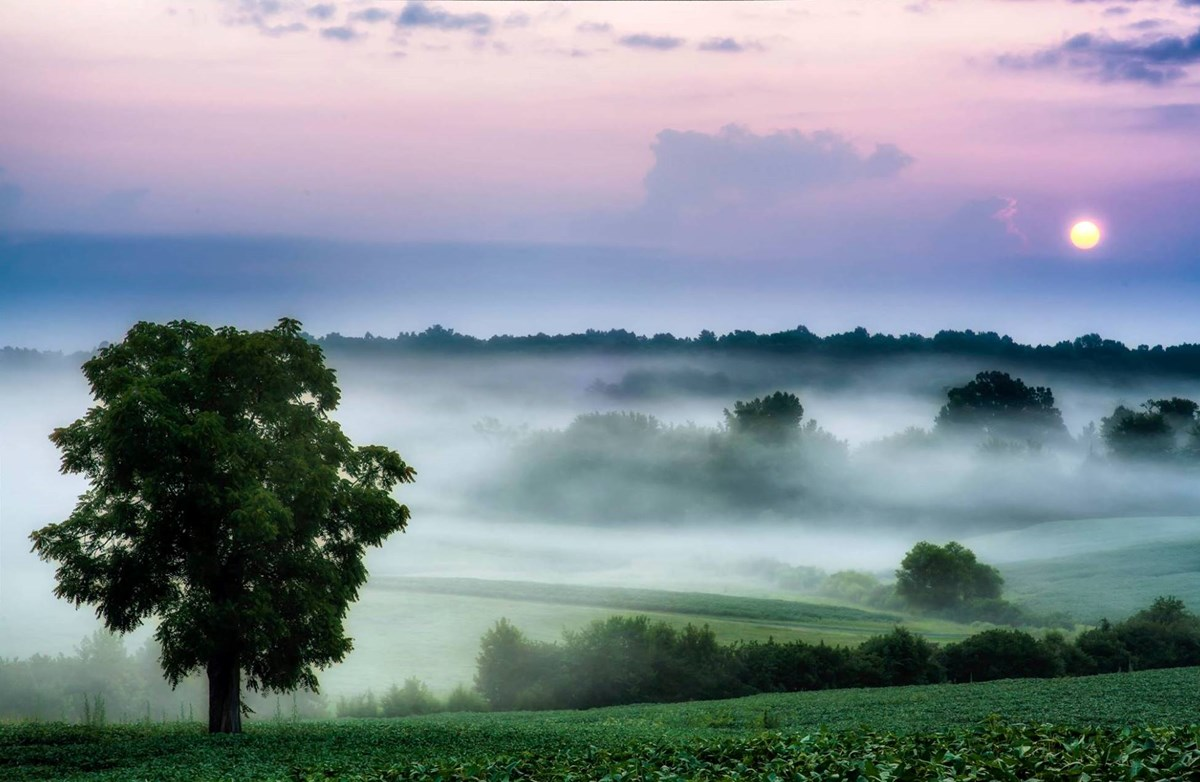 Fog hanging in folds of ground with green grass and blue and purple sky