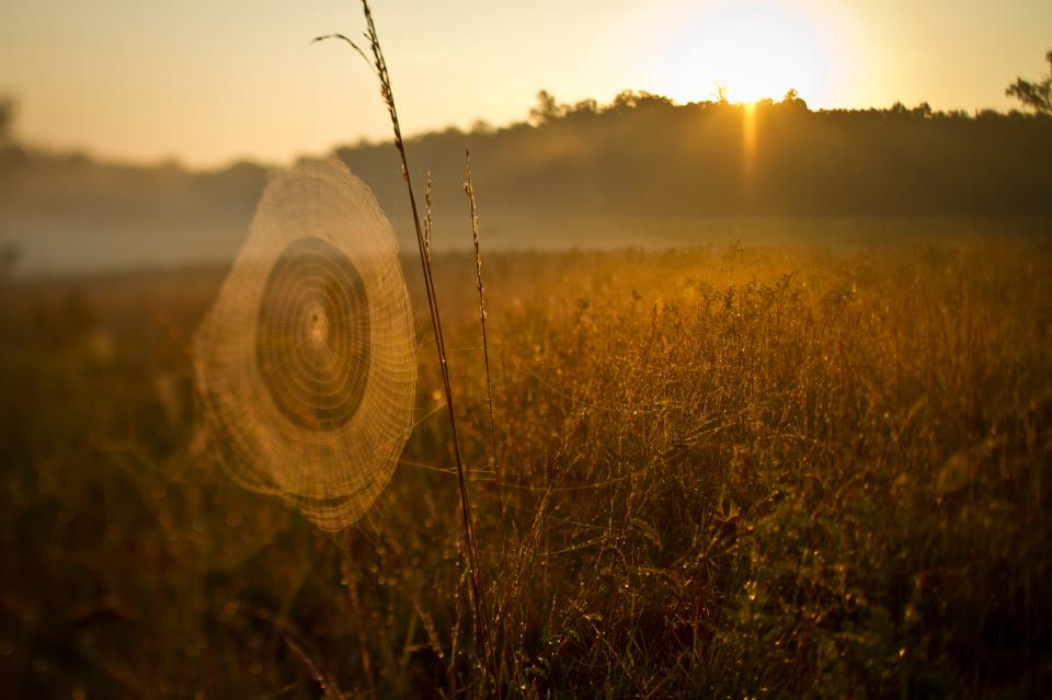 Spider web illuminated by the sunlight with tall grass in background