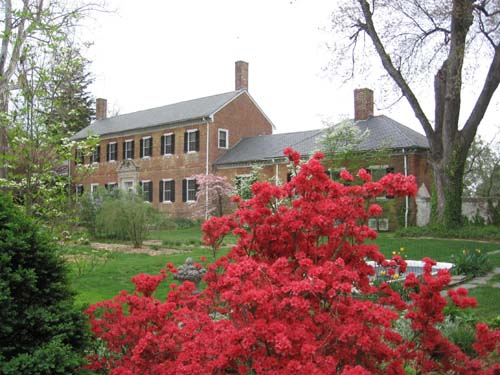 Azaleas at Chatham Manor