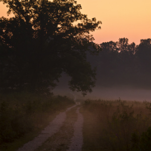Landrum Lane on the Spotsylvania Battlefield at sunrise on a foggy morning