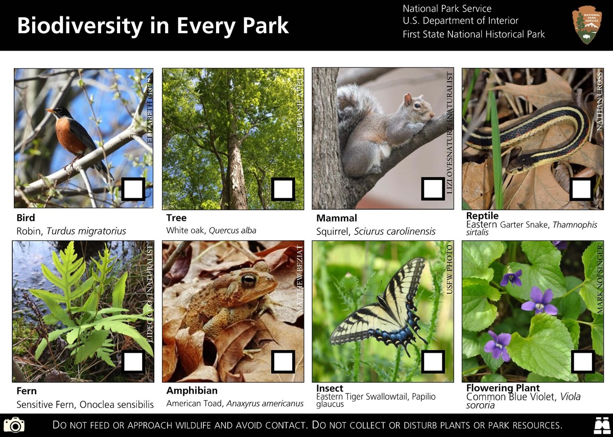 An example of the Biodiversity postcard with a robin, squirrel, snake, fern, frog, butterfly, flower, and tree pictured.