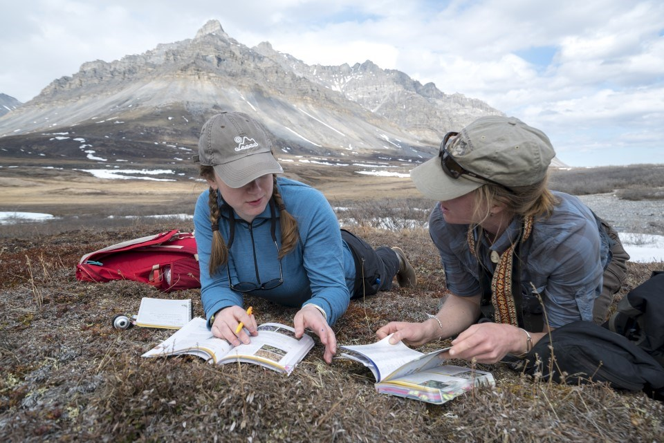 Identifying species on the tundra, 2016 Bioblitz