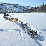 A multimedia feature about dog mushing in Gates of the Arctic