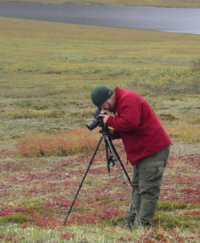 2007 Artist in Residence Carl Johnson photographing tundra plants in Gates of the Arctic.