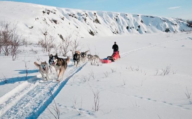 A musher and dog team approach the camera in a snowy scene