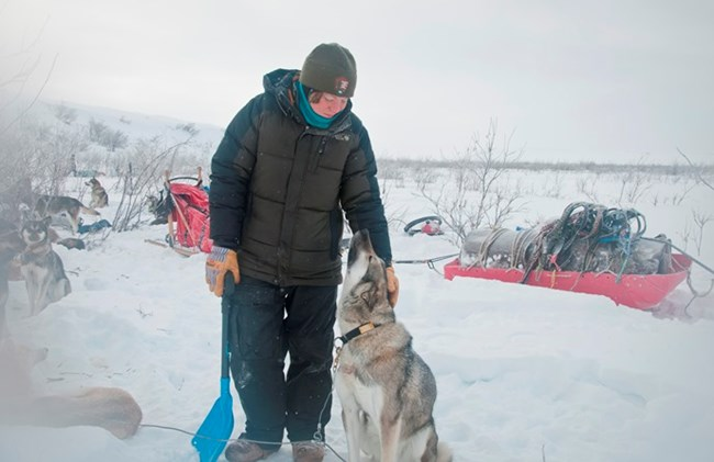 A musher pets a sled dog in winter