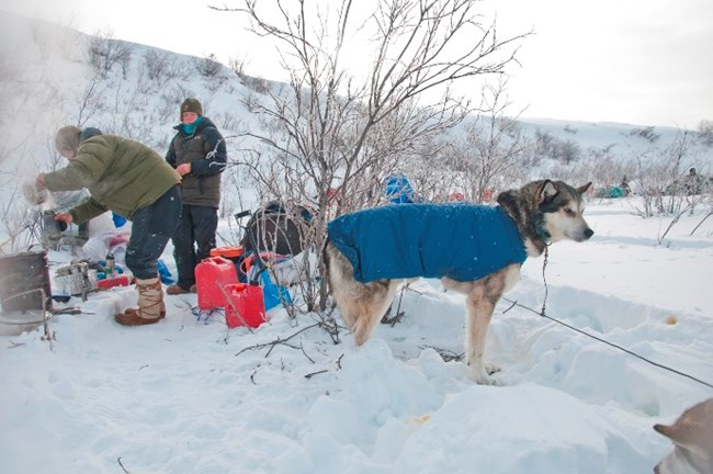 Mushers tend to the sled dogs and prepare their meal