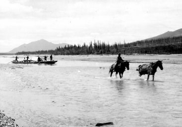 Historic photo of two horses pulling a supply boat up the Koyukuk river in the summer of 1911.