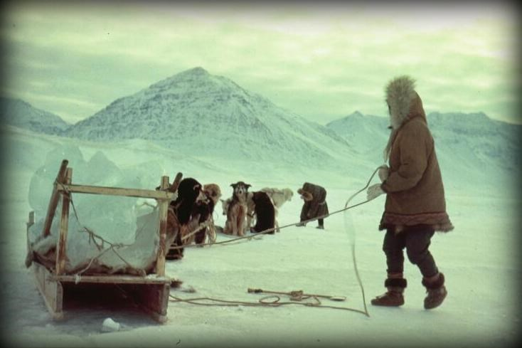 Two Nunamiut Eskimo use a traditional dog team and sled to gather ice from a lake near Anaktuvuk Pass.