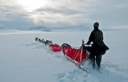 Dog team mushing on North Slope in winter