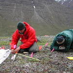 Archaeologists on their hands and knees searching the tundra for artifacts