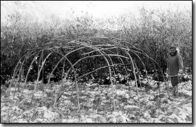Willow pole frame for caribou skin house