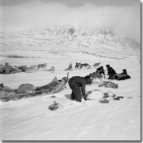 Nunamiut hunters working on caribou (Anchorage Museum of History and Art, Ward W. Wells Collection, WWS-4077-21)