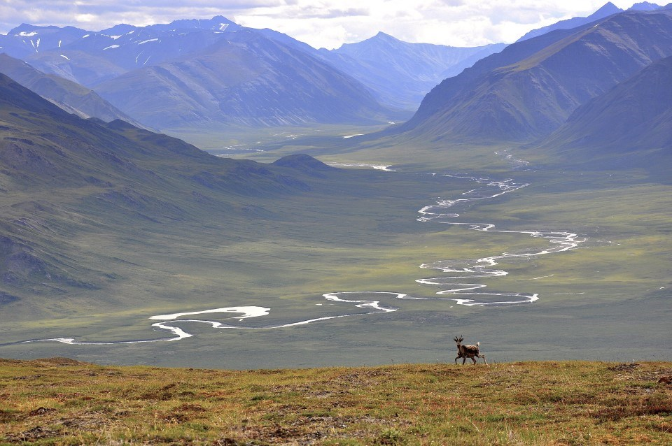 A caribou on a mountainside with a river valley background