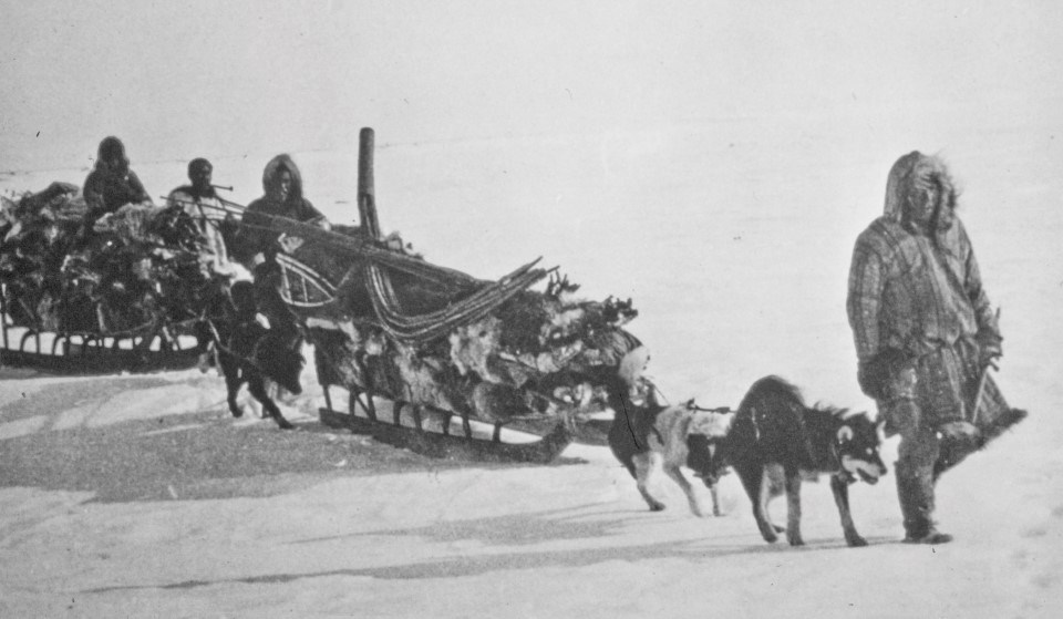 Historic photo of Alaska Natives using dogs and sleds to transport caribou hides in the Brooks Range