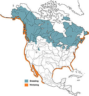 Distribution map for Common loons