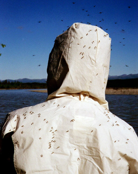 Lots of mosquitos flying around a persons back as they float down the Koyukuk River.