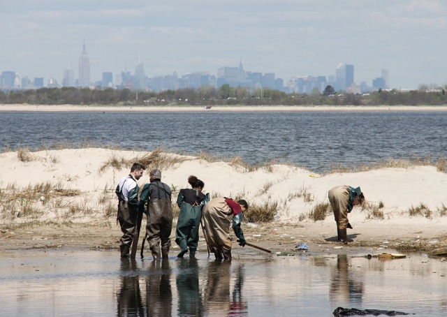 Volunteers from Bloomberg L.P. and the American Littoral Society clean a salt marsh debris at Gateway National Recreation Area.