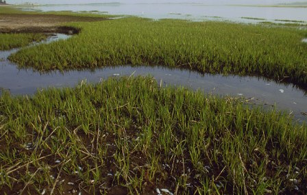 The salt marshes of Jamaica Bay during the summer months are home to fish, birds and many other creatures.