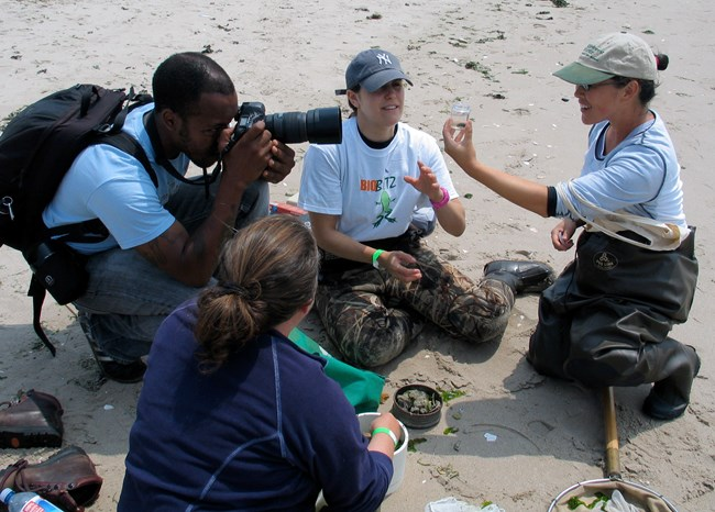 Volunteers and experts identified 484 species at the 2010 BioBlitz throughout Floyd Bennett Field located in the Jamaica Bay Unit of Gateway National Recreation Area.