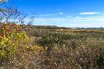 Autumn Saltmarsh Landscape