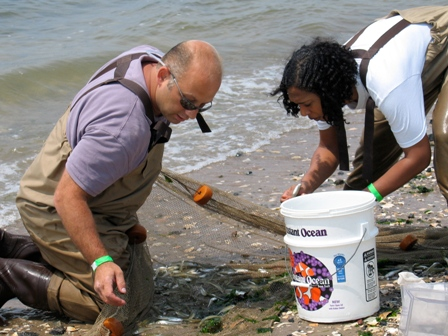 Professor Robert Dickie of Brooklyn College and assistant Nicole Wharf gather silversides at Plumb Beach during Jamaica Bay BioBlitz 2010.