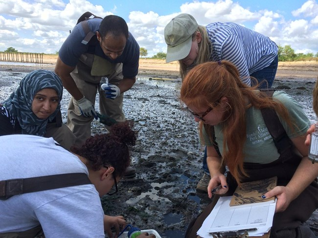 students conducting an experiment at the Jamaica Bay Wildlife Refuge