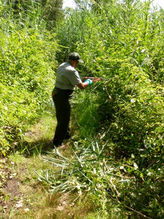 Nena Shaheed lends a hand trimming the trails at the Jamaica Bay Wildlife Refuge.
