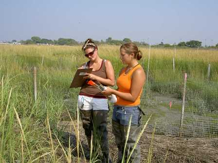 Recording data from one of Jamaica Bay's salt marshes.