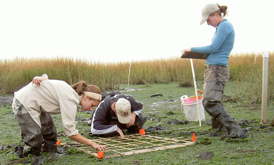 Student Conservation Association interns collecting data at Jamaica Bay's Big Egg Marsh.