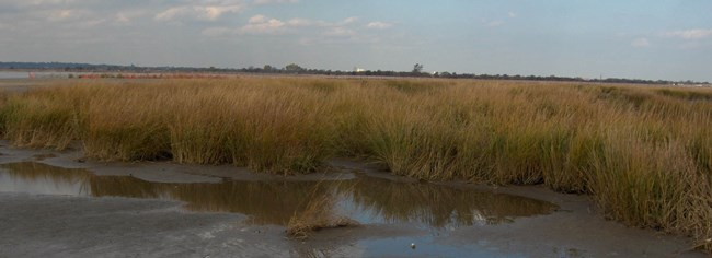 The marshes of Jamaica Bay have been disappearing at an alarming rate.  By exploring best practices for restoration the National Park Service and the City of New York hope to improve the resilience of the Bay.