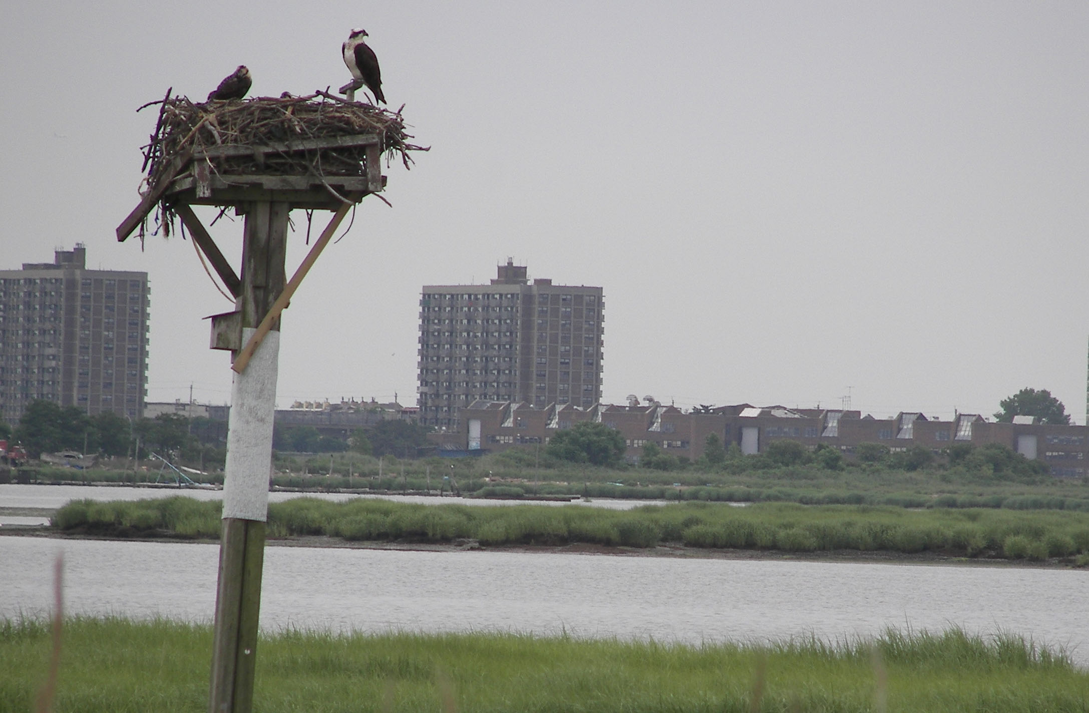 The Jamaica Bay Wildlife Refuge in Gateway National Recreation Area is a key stop over for migrating birds as well as home to many others.