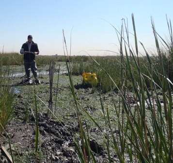 A student researcher at Yellow Bar Hassock Marsh in Jamaica Bay.