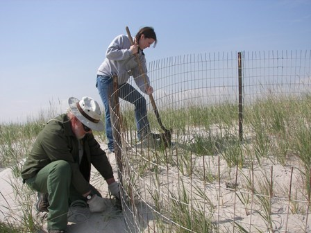 National Park Service employees and volunteers protect plover nests from predators.