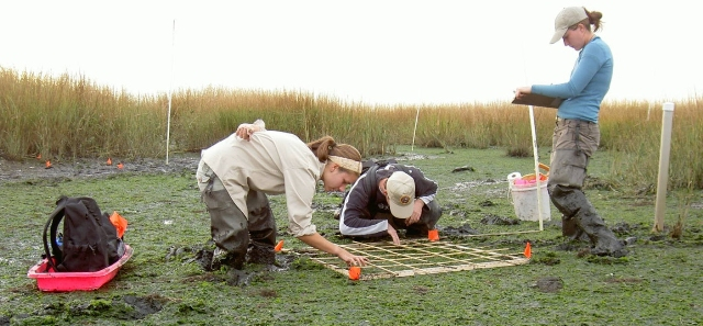 Researchers examine what lives in the muck of Big Egg Marsh in Jamaica Bay.