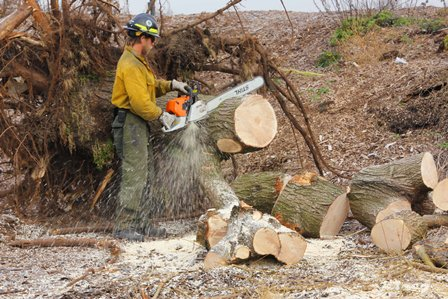 A tree falls in Brooklyn: Jordan Black, sawyer from Great Smoky Mountains National Park, helps clean up Floyd Bennett Field.